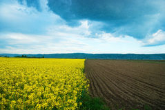Half ploughed field with rape Stock Photography