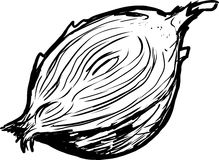 Half of raw onion sketch on white Royalty Free Stock Image