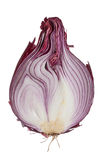 Half of a red onion. The sweet red onion sliced onion in half. red/purple skin, white flesh insides that contain shades of purple, hairy root and stem are royalty free stock photo