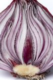 Half red onion on white background Stock Images