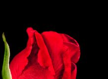 Half red rose on black background with space for text Royalty Free Stock Photos