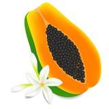 Half rijp die papajafruit met bloemen op witte achtergrond worden geïsoleerd stock illustratie