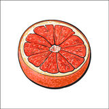 Half of ripe pink grapefruit, red orange, sketch vector illustration Royalty Free Stock Photography