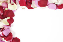 Half rose petal frame Royalty Free Stock Photo