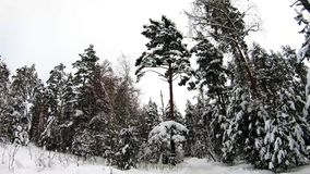 Half round view from right to left. Snow-white winter forest, it is slowly snowing. Snow covered road goes through the forest. Half round view from right to stock video footage
