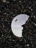 Half of a Sand Dollar on Gravel Beach. Half of a Sand Dollar on a Gravel Beach Stock Images