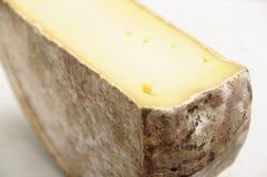 half savoylunta för ost fotografering för bildbyråer