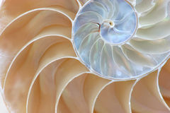 Half Shell Nautilus Stock Images