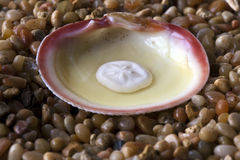 Half shell with sea star Stock Images