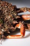 Half shell, spine, leg, European spider crab, shellfish, orange,. Legs close up with part of shell of European spider crab (Maja Squinado) in studio with macro Stock Photos