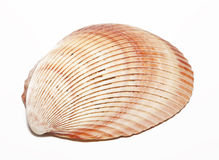 Half shells Stock Photo