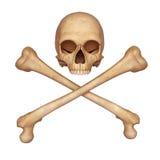 Half skull with bones. 3d art illustration of half skull with bones Stock Image