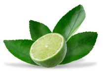 Half with slice of fresh green lime isolated on white background.  stock photography