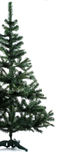 Half of spruce. Half of christmas tree spruce over white background Stock Images