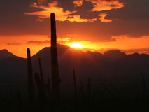 Half Sun Disk with Rays. Half of a sun disk sunset with Saguaro cactus in the foreground and mountains in the background Royalty Free Stock Images