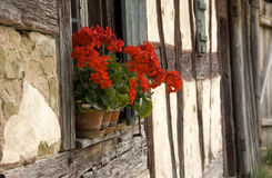 Half timbered. Red geraniums on the windowsill of an old half timbered farmhouse royalty free stock photo
