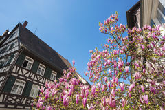 Half-timbered facade with magnolia tree. Haslach, Black Forest, Baden-Wurttemberg, Germany, Europe Royalty Free Stock Image