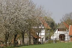 Half-timbered house with cherry blossom in April in Holperdorp, Tecklenburger Land, North Rhine-Westphalia, Germany. Europe stock images