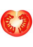 Half of tomato, vertical slice, vector, on white Stock Image