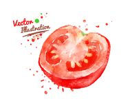 Half of tomato. Watercolor vector drawing of half of tomato with paint splashes stock illustration