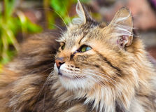 Half turned cat in soft focus Royalty Free Stock Images