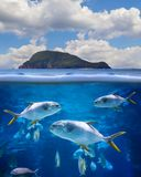 Half underwater photo of tropical paradise with a group of fishes. Snubnose Pompano - Trachinotus Blochii. The water is clear and blue. There is a green island stock images