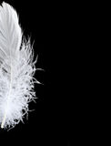 Half of the white fluffy feather on a black background. Half of the white feather on a black background Royalty Free Stock Photography