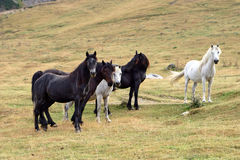 Half wild horses Royalty Free Stock Photography