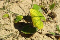 Half-yellow leaf Royalty Free Stock Photo