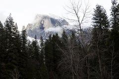 Halfdome med snö och molnig himmel till och med träd Fotografering för Bildbyråer