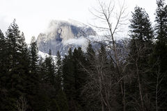 Halfdome With Snow And Cloudy Sky Through Trees Stock Image