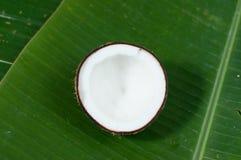 Halfs кокоса на предпосылке Стоковые Изображения RF
