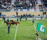Halftime at Football Game. Mustang horses, the team mascots, gallop on the field during halftime at a CalPoly football game in San Luis Obispo, California Stock Image