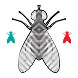 Halftone Fly Icon. Isolated on White Background. Pest Symbol in Engraving Style vector illustration