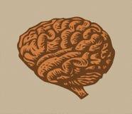 Halftone human brain Stock Photography