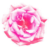 Halftone rose Stock Photography
