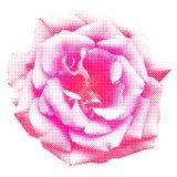 Halftone rose royalty free illustration