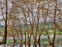 Haliacmon Fluss und Bäume Lizenzfreies Stockfoto