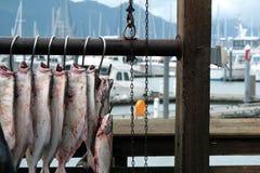 Halibut. A big fishing of halibut in Homer - Alaska Stock Images
