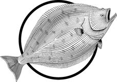halibut Obraz Stock