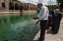 Halil-ur Rahman Mosque, helig sjö (fisk sjön), Urfa Royaltyfria Bilder