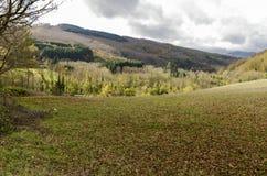 Halizna góra w jesieni Fotografia Stock