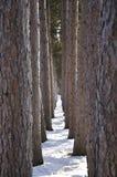Hall des arbres Photos libres de droits