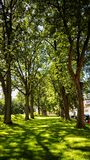 Hall des arbres Images libres de droits