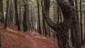 Hall des arbres, tapis des feuilles s?ches image stock