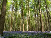 Hall forest royalty free stock images