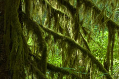 Hall of Mosses Royalty Free Stock Photos