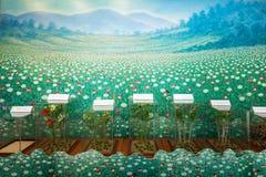 Hall of Opium Museum Stock Image