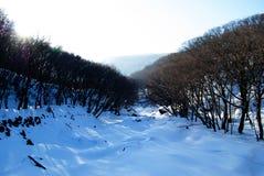 Hallasan berg på den Jeju ön Korea i vinter Arkivbild