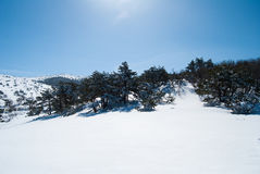 Hallasan mountain at Jeju island Korea in winter Royalty Free Stock Image